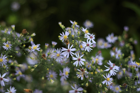 Narrow Depth of Field Photo of Group of White and Purple Wildflowers in Garden