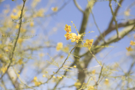 Closeup of Tiny Yellow Flowers Growing on Tree Branches