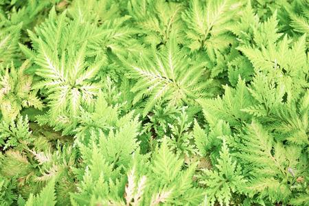 fern leaf: fern leaf as background Stock Photo
