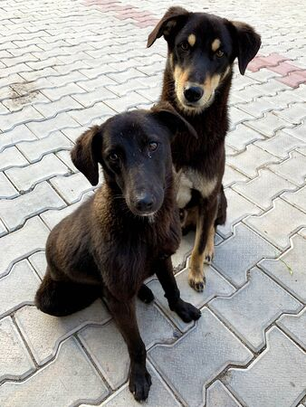 Two Sad Stray Dogs looking at the viewer with a hope in there eyes.