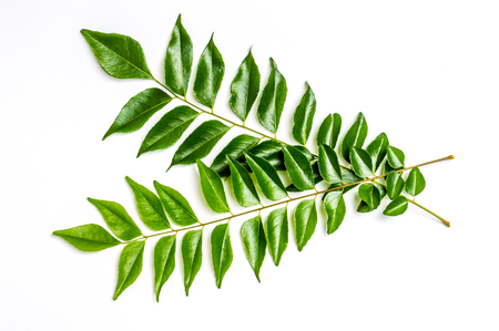 good cholesterol: Green curry leaves, used in sri lanka, Indian and Asian cooking. This is a good remedy for cholesterol Stock Photo