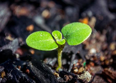 new life, seeding on a black ground