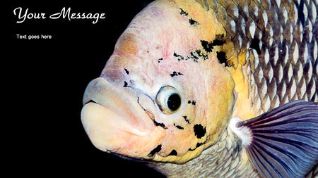 exoticism saltwater fish: Fish with your message