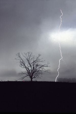 Lightning storm in the field, a bolt of lightening strikes near a tree.