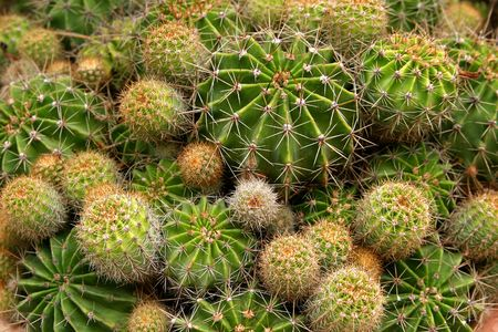 Great variety of plants of cactus in the garden.