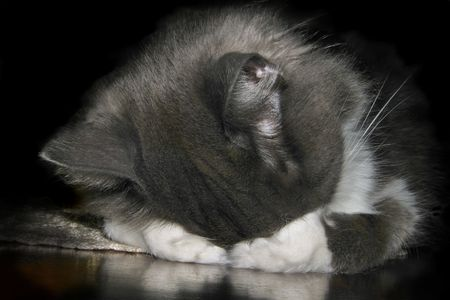 A cat covers his eyes while he sleeps. Stock Photo