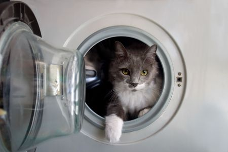 Cat in the washing machine awaiting its bath. Stock Photo