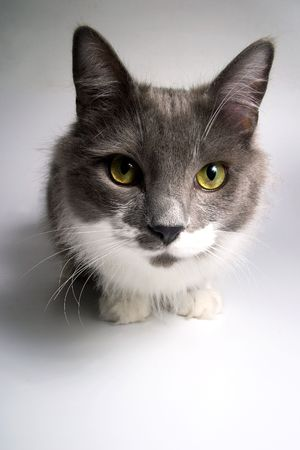 Cat that looks at the camera Stock Photo