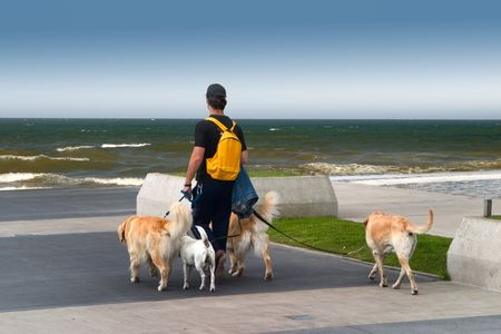 Man walking dogs on the beach,  during a summer evening.