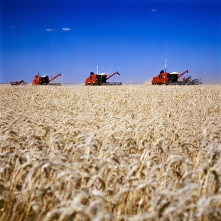 Harvesting machines working in wheat fields under a blue sky.