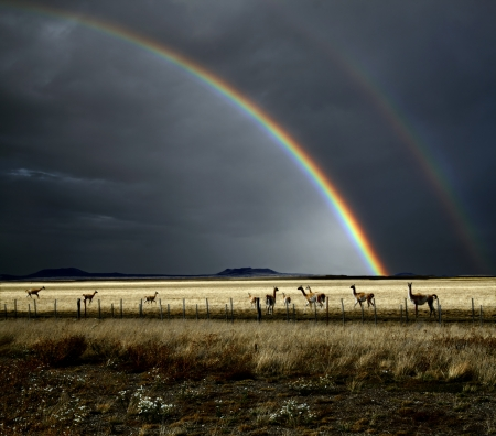 The rainbow after the storm, and guanacos are in an area of Patagonia