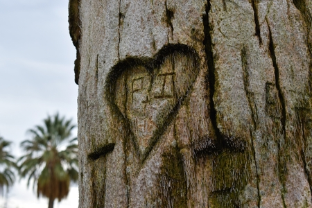 A secret lovers message carved into a tree Stock Photo