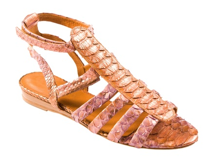 ankle strap: Python leather roman sandal isolated on white background. Clipping path included.