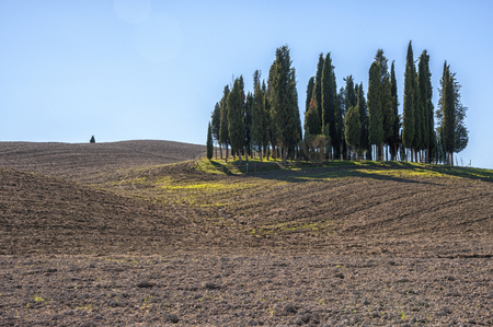 st: SAN QUIRICO DORCIA, TUSCANY  ITALY - OCTOBER 31, 2016: Beautiful tuscan landscape near San Quirico dOrcia, with rolling hills and tuscan cypress trees. Located in Val DOrcia countryside - Italy.