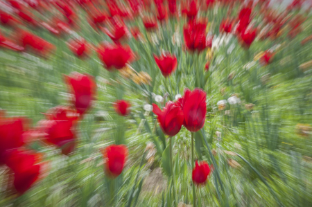 Abstract motion blur of flowers - long exposure