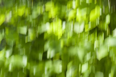 Motion blur background, green bokeh background - blurred leaves