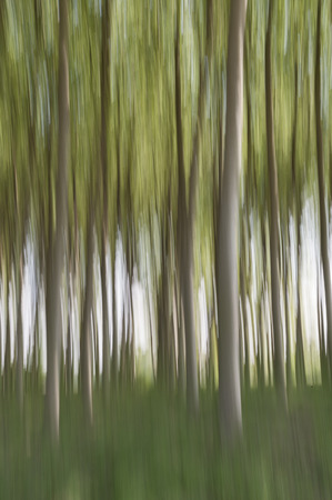 Abstract motion blur of trees in a forest - long exposure Standard-Bild