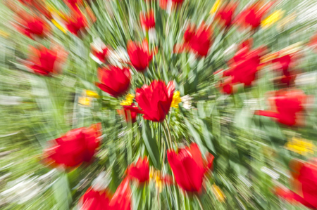 Abstract motion blur of flowers (tulips) - long exposure