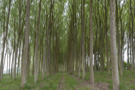 Abstract motion blur of trees in a forest - long exposure Zdjęcie Seryjne