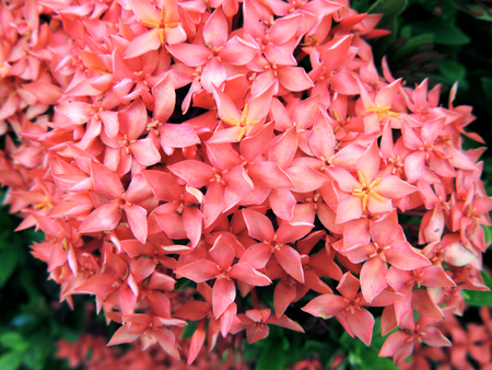 natue: Pink Flowers