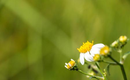 blurr: flower