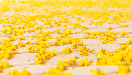 represent: yellow flowers lay on floor represent fall season