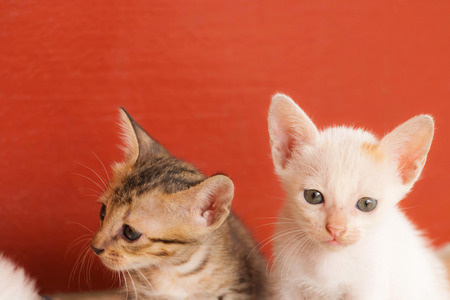 white and brown kitten sit together with copy space
