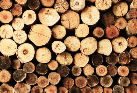 different size of raw cut logs for abstract background