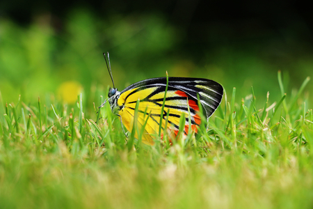 beautiful colorful butterfly on moving grass in garden Stock Photo