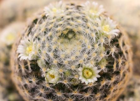 close up real cactus