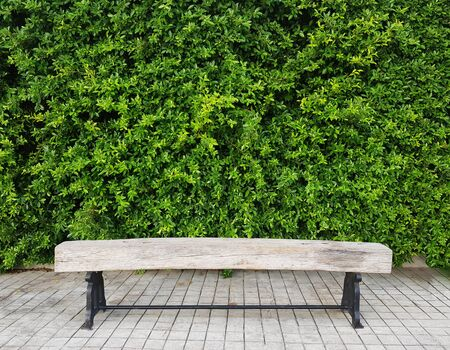 empty wooden bench in front of green plant wall in park