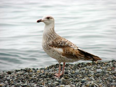 Gull on the sea beach Stock Photo - 8926200