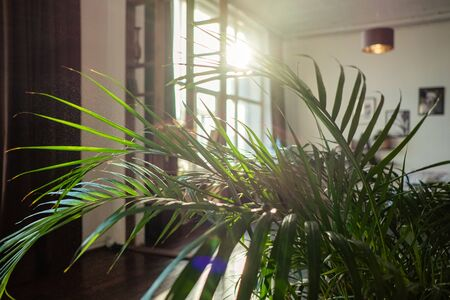 home palm tree plant branch with sun light indoors