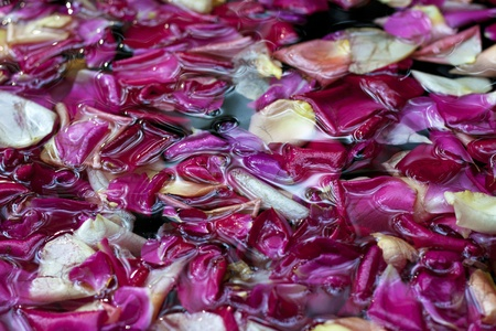 Close up of rose petals in water, angle view. Ideal for backgrounds and compositions. photo