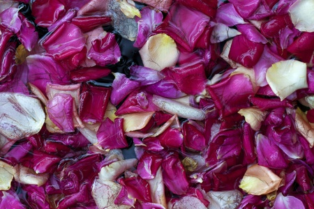 Close up of rose petals in water, top view. Ideal for backgrounds and compositions. photo