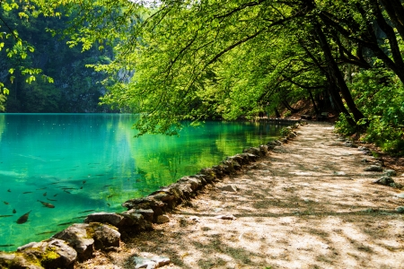 Path near a forest lake with fish in Plitvice Lakes National Park, Croatia photo