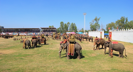 surin: Surin-November 15,2014;  Elephant army prepare to start fighting in Surin Elephant Round-up 2014 Editorial