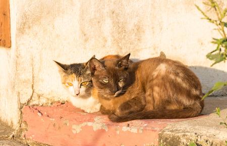 sunbath: twee wilde kat zitten voor take zonnebad
