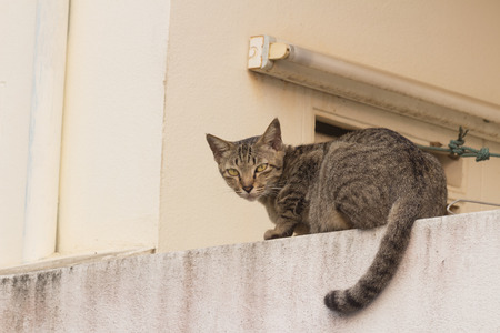 wild cat: wild cat lie down on the wall