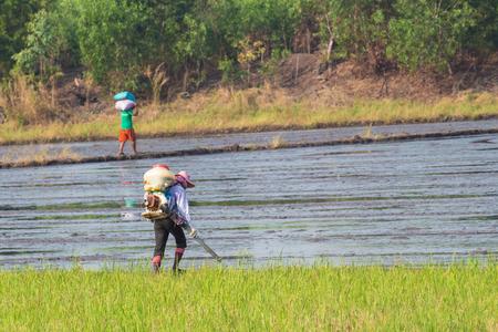 insecticide: farmer prepare sprayer machine for spray insecticide in the rice field Stock Photo