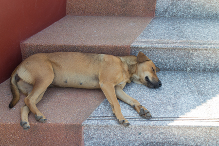 The brown dog sleep alone on the staircase