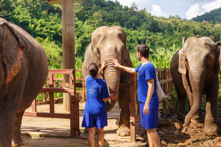 A boy and a girl caress an elephant at sanctuary in Chiang Mai Thailand Stock Photo