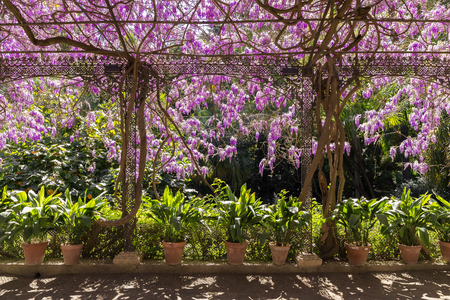 Arbor with pots and flowers wisteria