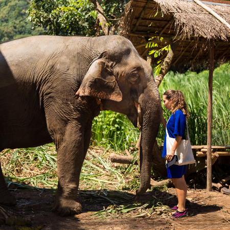Young girl takes care of an elephant in a sanctuary in the jungle of Chiang Mai in Thailand