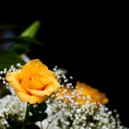 yellow flower: bouquet with yellow rose on black background, copy space