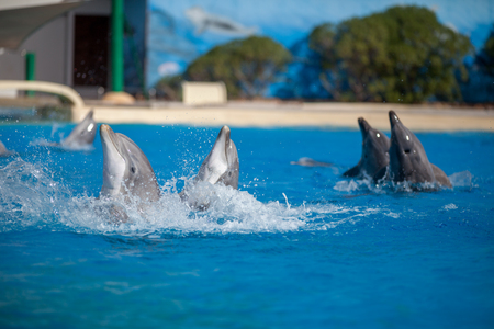 Group of Dolphins Enjoying Water