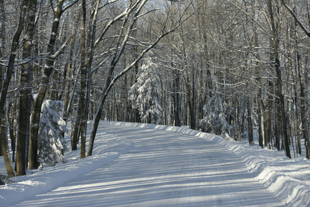 Snow covered road through woods going up to Rib Mountain State Park in Wisconsin. Banque d'images