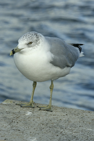 Close up of seagull perching on concrete block