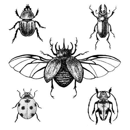 mariquitas: Dibujado a mano escarabajos establecen. Insectos en blanco y negro para el diseño, iconos, logotipo o impresión. Gran ejemplo para Halloween.