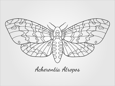Hand drawn hawk moth silhouette
